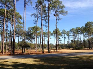 Palmetto Bluff Home Sites