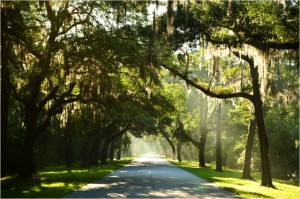 palmetto-bluff-spanish-moss-entrance